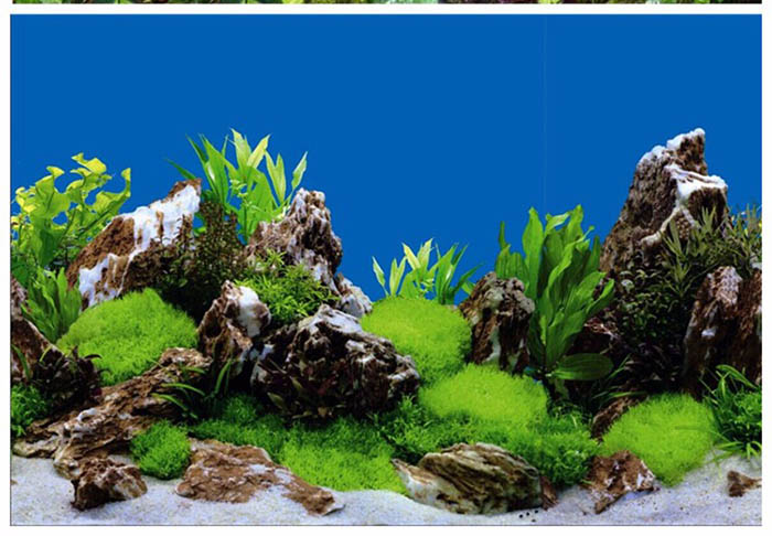 Double Single Side Aquarium Fish Tank Decorative Aquarium Background Paper